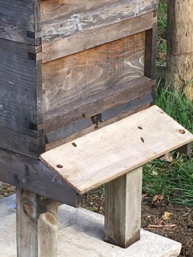 Bees at work.