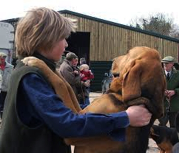 Hampshire Blood Hounds